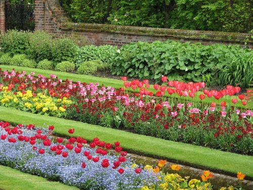 flower tulip flowerbed