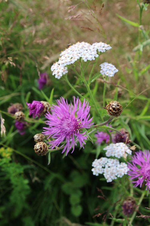 gėlė,gamta,augalas,spalva,žiedas,žydėti,flora,pavasaris,spalvinga