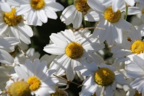 flower nature garden