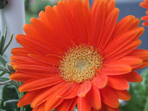 flower orange summer