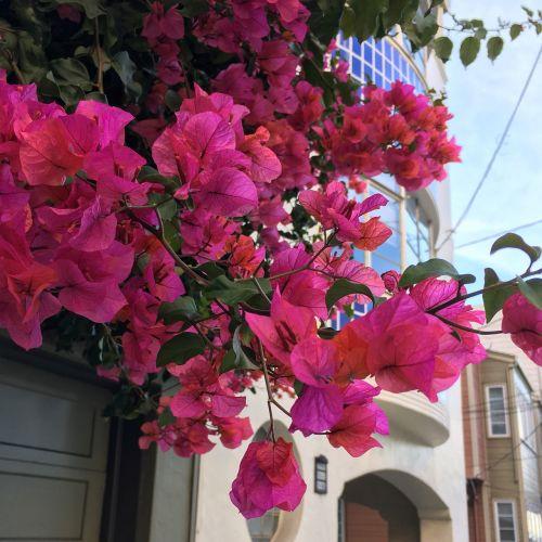 flower san francisco francisco
