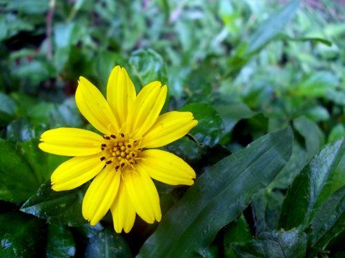 flower sri lanka peradeniya