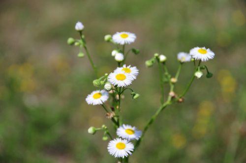 flower plant sumer
