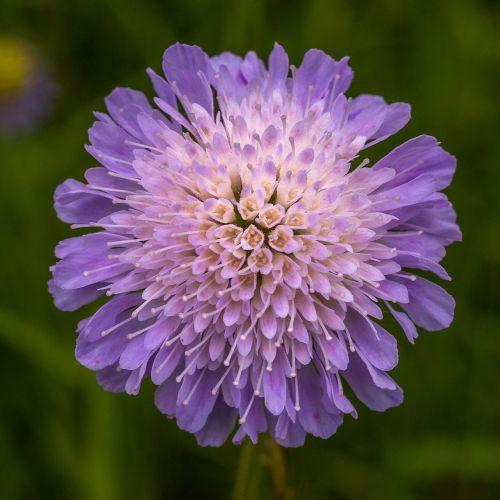flower purple macro