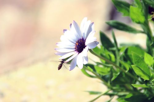 flower bee violet