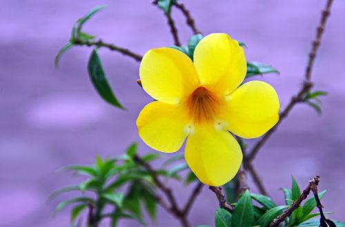 flower yellow tropical flower