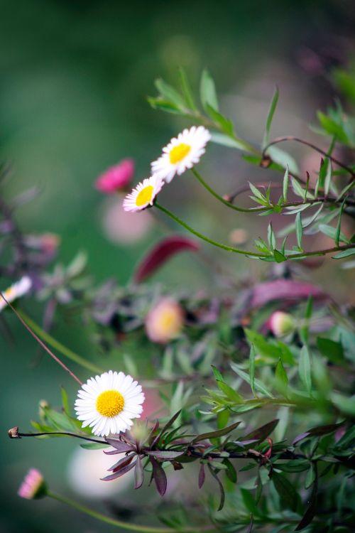 flower garden nature
