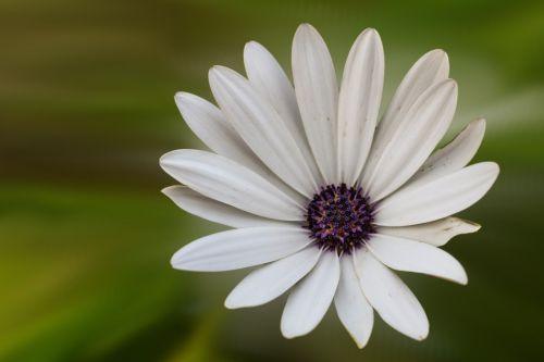 gėlė,žiedas,žydėti,balta,baltas žiedas,Mage važiuoja