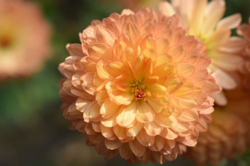 flower nature natu