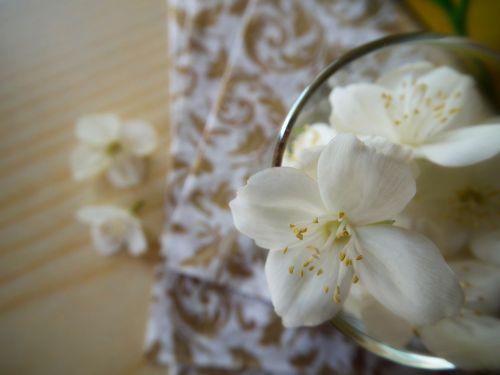 flower jasmine white