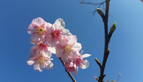 flower blooming bl