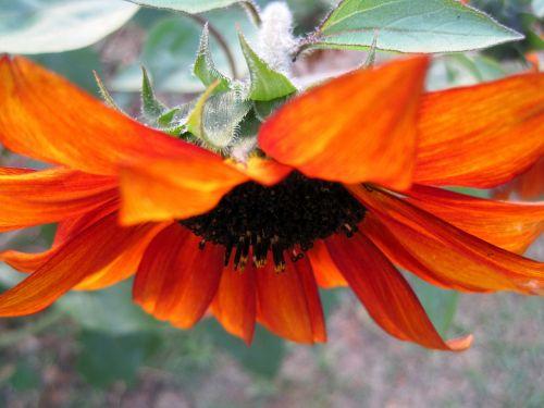 flower bloom facing down