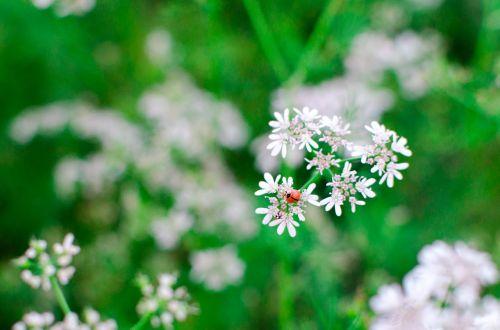 flower green bang