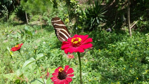 flower butterfly garden