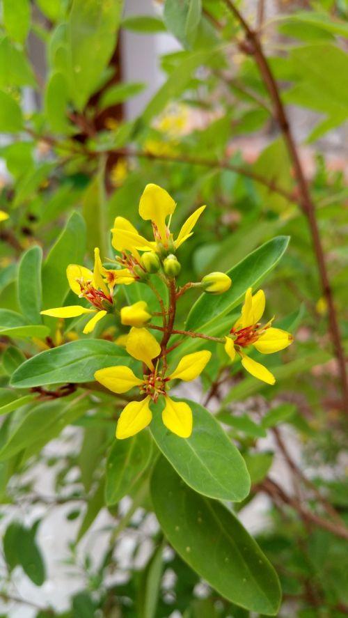 gėlė,geltonos gėlės,pavasaris