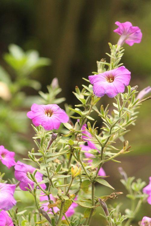 flower wild flowers