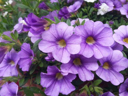 flower pot plants