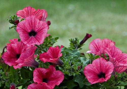 flower flowers beautiful