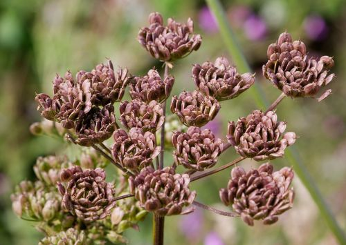 flower seeds heads