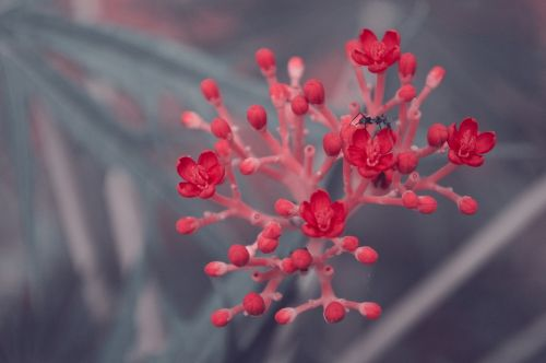 flower red bee