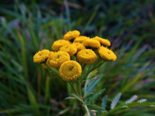 flower green yellow