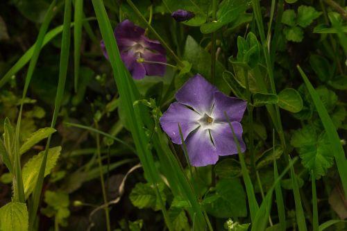 flower violet green