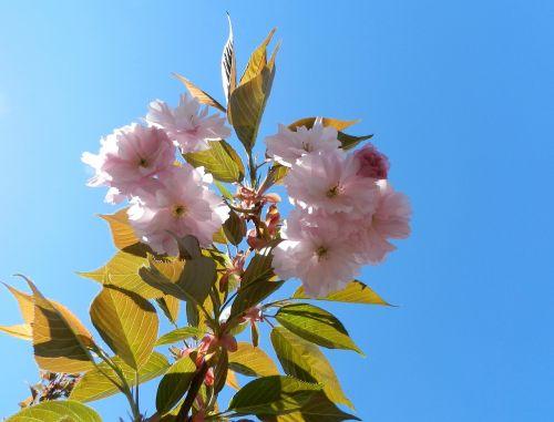 flower pink sky