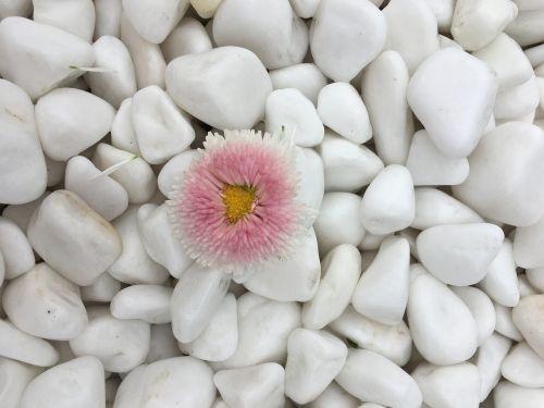 flower dell white
