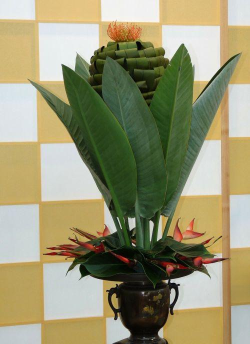 flower plant arrangement