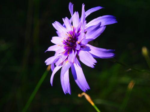 flower purple purple flower