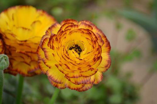 flower plant spring