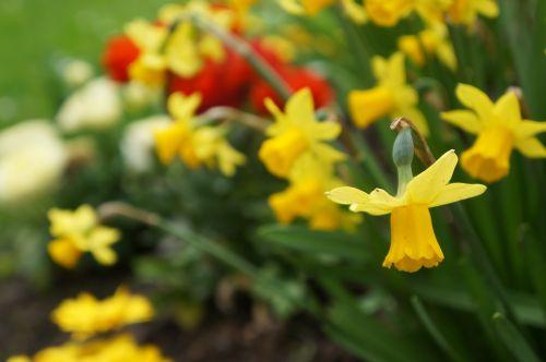 flower yellow yellow flower