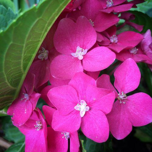 flower sprig pink flower