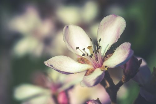flower,close,white,blossom,bloom,macro,spring,summer,colorful,purple,bloom,flourished,nature,plant,blossomed,nature recording