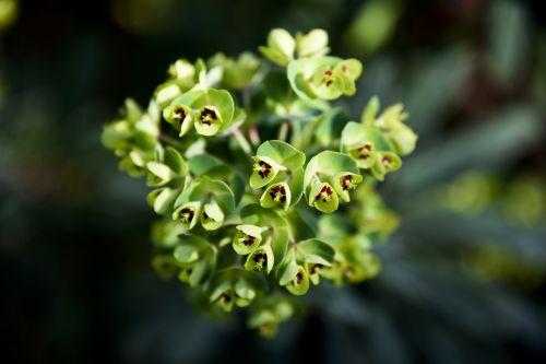 flower plant green