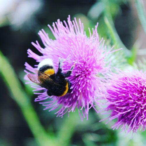 flower hummel summer