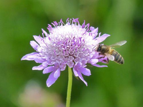 flower bee libar