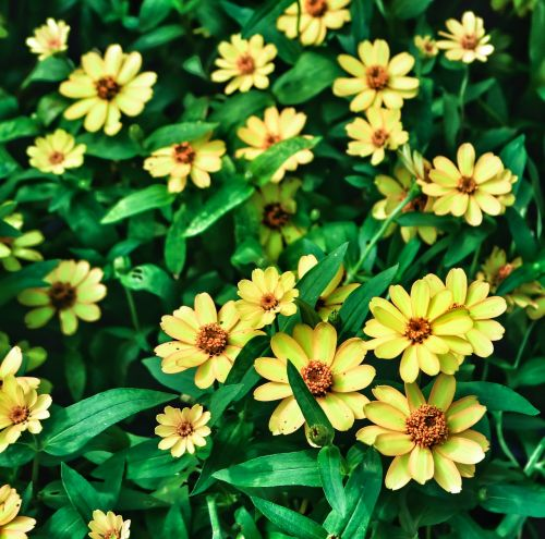 flower plant yellow