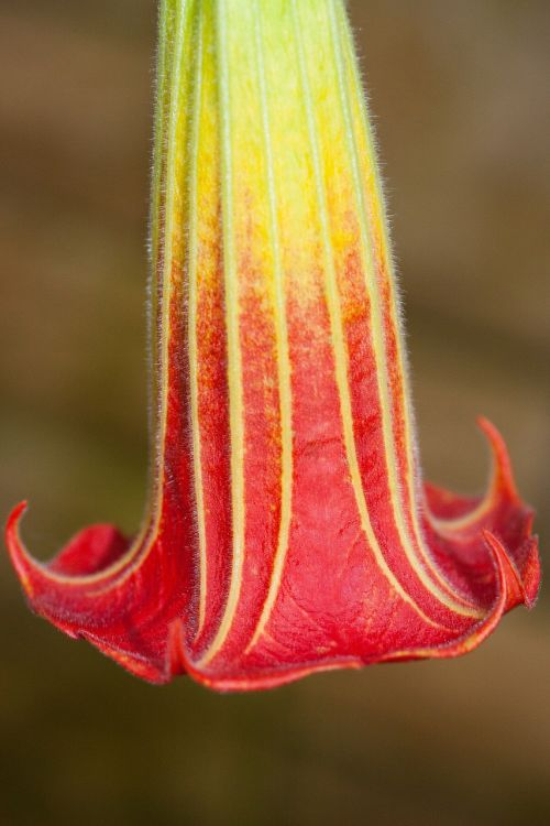 flower plant bell shaped