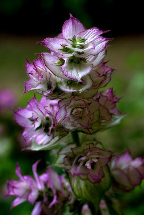 flower mov wild