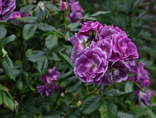 flower purple plant