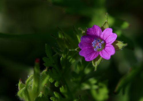 flower little mov