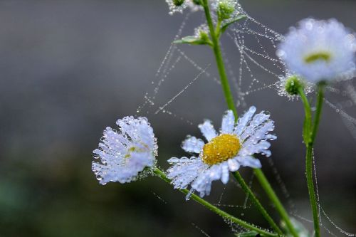 flower morgenrot nature