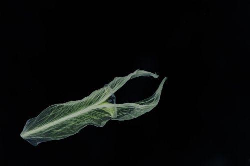 flower petal negative