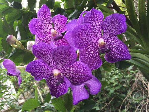 flower rolling violet