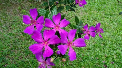 flower nature mato