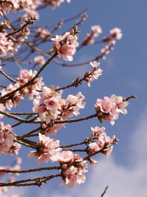 flower pink blossom