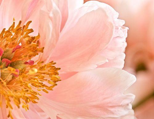 flower pink stamen