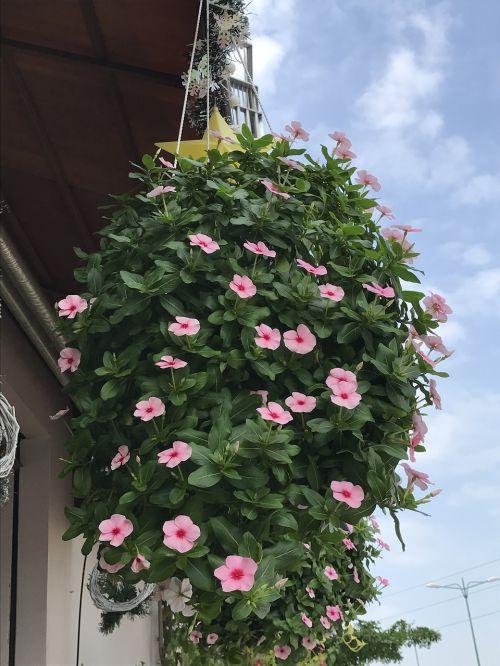 flower at newtown coffee pham van dong