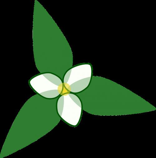 flower design floral